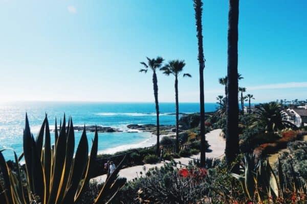 los-cabos-mexico-agave-beach-cactus