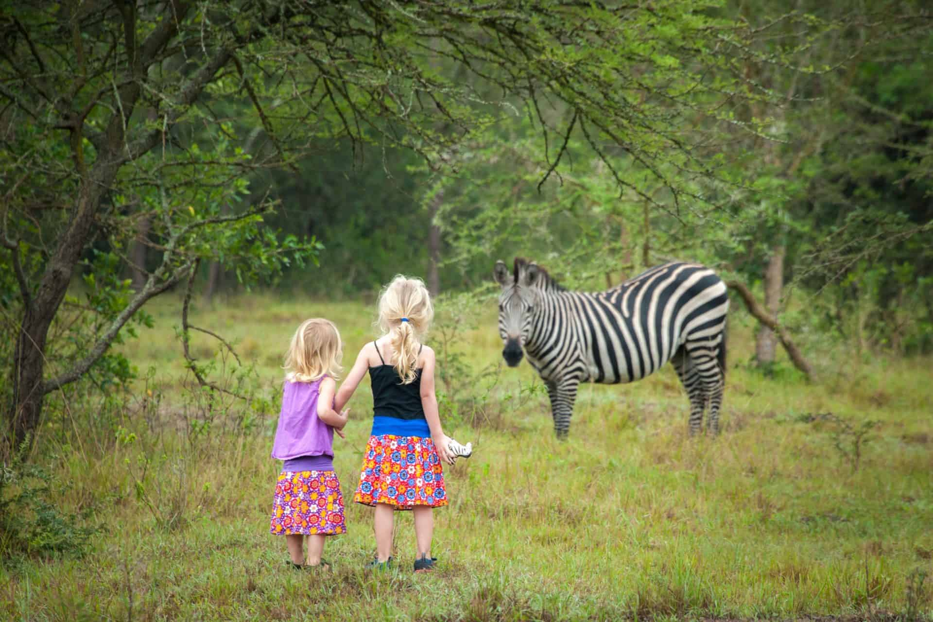 Two girls showing their toys to zebra in safari park